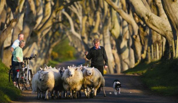 """Résultat de recherche d'images pour """"ROUTES : Irlande, Dark Hedges"""""""