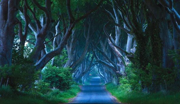 Les Dark Hedges, une mystérieuse allée de hêtres près de Ballymoney