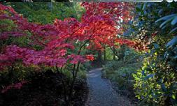 Irlands Gärten