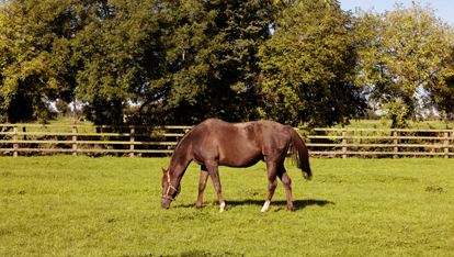Irish National Stud
