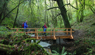 Ballyhoura Mountains, Co. Limerick - picture from Tourism Ireland, ireland.com