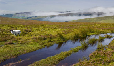 Galtee Mountains - picture from Tourism Ireland, ireland.com