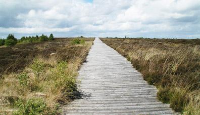 Corlea Trackway, County Longford