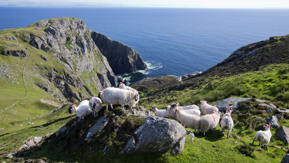... donegal killybegs harbor county donegal slieve league cliffs county