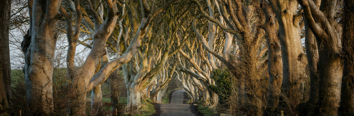 Die Dark Hedges