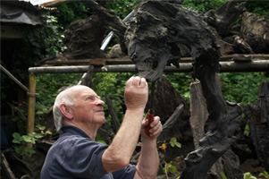 Casey's Bogwood Sculptures