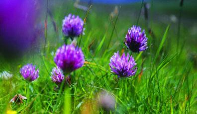 Irlands Flora