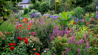 "The Dillon Garden  provided by <a href=""http://www.dillongarden.com/"" >Helen Dillon</a>"