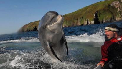 Il simpatico delfino in persona
