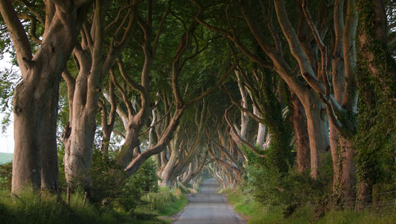 The Dark Hedges, County Antrim (Game of Thrones' Kingsroad)