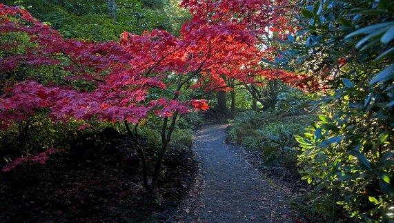 Altamont Gardens, Carlow