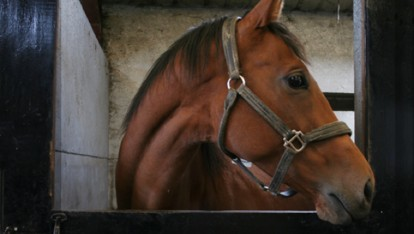 Mare at the National Stud stables