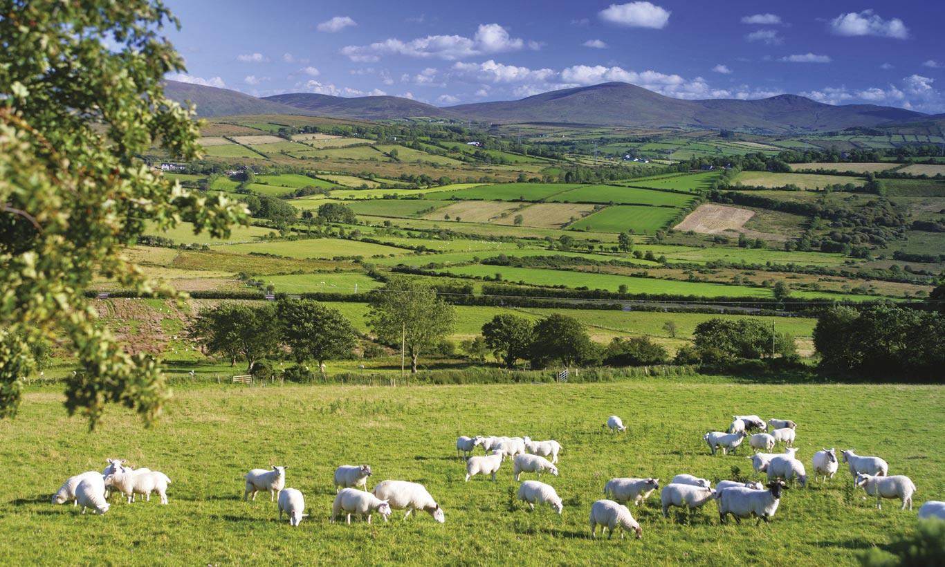 northern ireland year of food and drink ireland