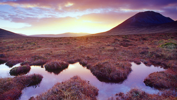 "A bogpool beneath Mt Errigal, County Donegal provided by <a href=""http://www.garethmccormack.com/"" >Gareth McCormack</a>"