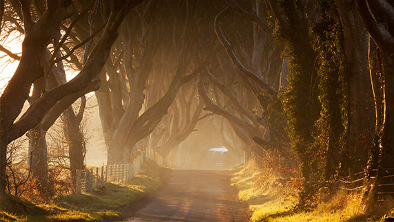 Number 9: Dark Hedges (Game of Thrones), County Antrim