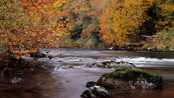 "River Bandon, West Cork ofrecido por <a href=""http://www.mikebrownphotography.com/"" >Mike Brown</a>"