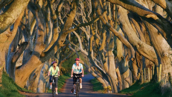 The mysterious Dark Hedges at Armoy, County Antrim