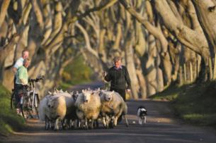 Discover the Country Roads of Ireland