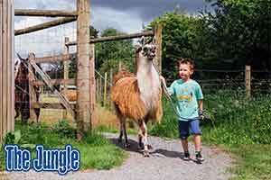 Llama Trekking  Take a walk on the wild side at The Jungle