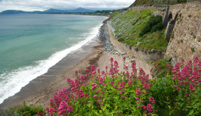 Baie napolitaine de Killiney