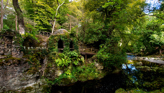 Where the wild things are – Tollymore Forest Park, County Down