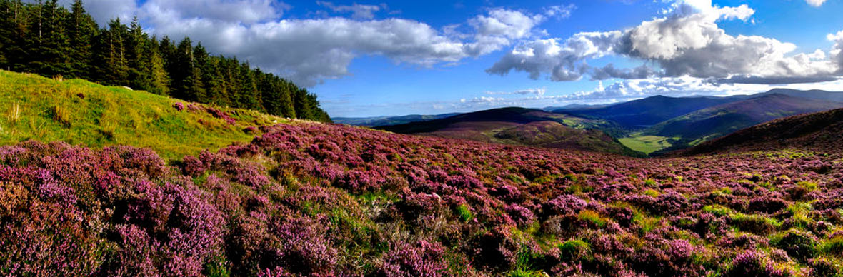 Monts du Wicklow
