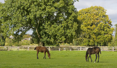 Irish National Stud, County Kildare