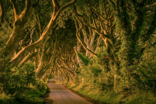 Faszination Game of Thrones - 8 Tage Autotour abbis Dublin