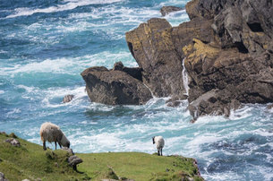 Indulge yourself with a Private 8 Day Tour of Ireland with Butlers Tours of Ireland from 1090 p.p