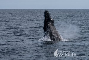 Explore Irelands Wild South Coast with a 4day Wildlife and Bird Watching Holiday with Irelands Wildlife Tours for 699pp