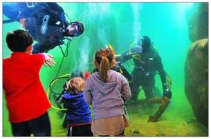 Enjoy a Family Adventure Scuba Diving in the AQUARIUM with Dive Academy  Scuba Diving School Co Clar