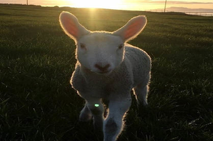 Find your inner farmer with a Farm Experience with Campview Farm Co Donegal for 20 per Adult