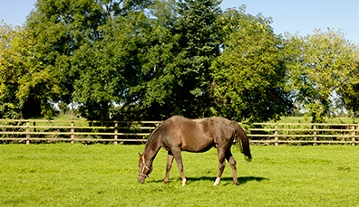 The National Stud (Haras national)