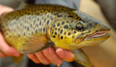 Daten-Websites ireland Fisch Überschrift auf Dating-Website