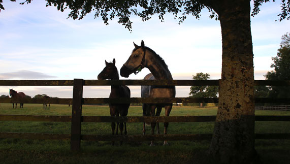 Irish National Stud: Horse Breeding In History: The Story Of Ireland's