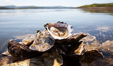 Oesters uit Ierland