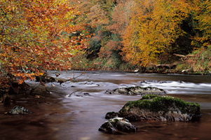 Photographing autumn in Ireland