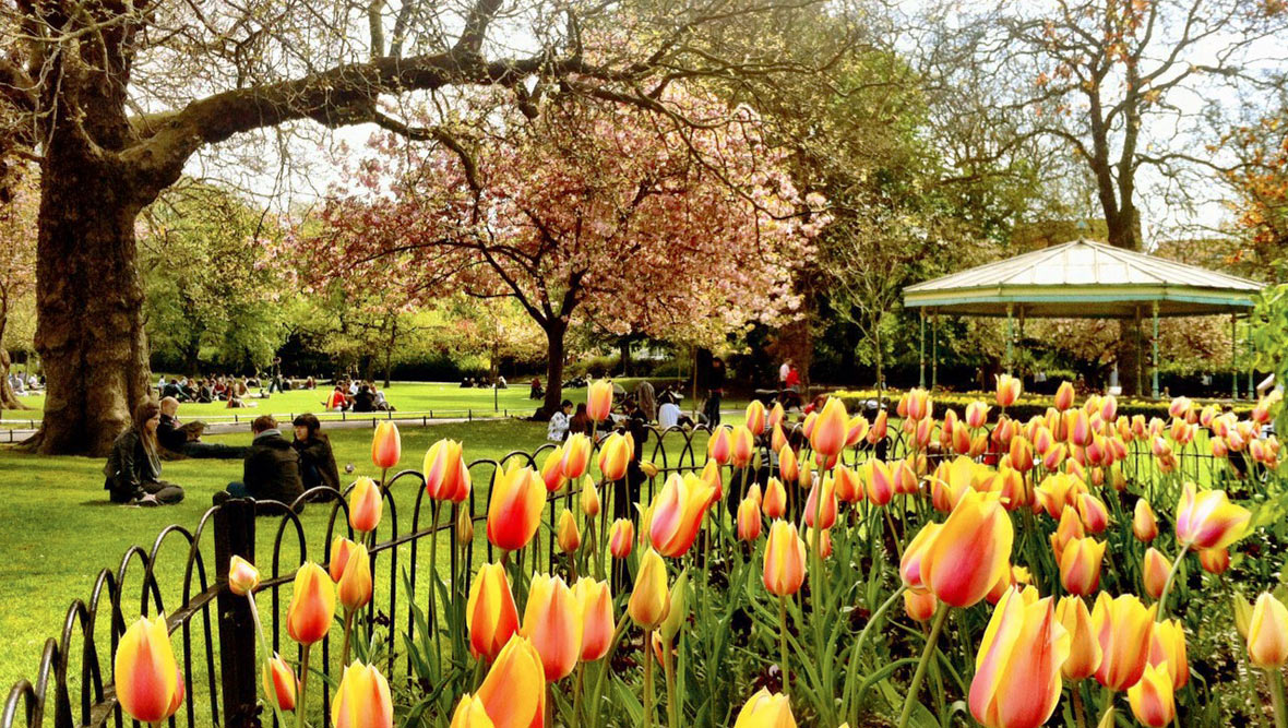 St Stephen's Green in bloom