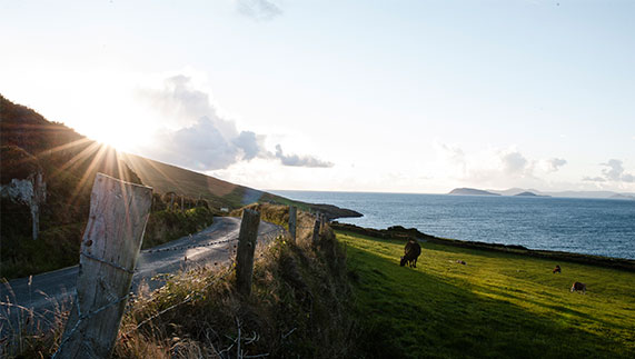 Number 8: Dursey Island Farm, County Cork