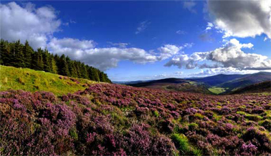 P.S. I Love You – County Wicklow