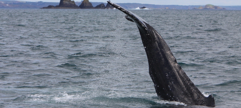Alimentation d'eau de baleine brancher